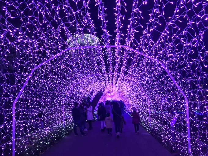 湘南の宝石 光の大空間へと誘う光のトンネル