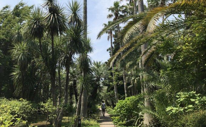 サムエル・コッキング苑 亜熱帯植物