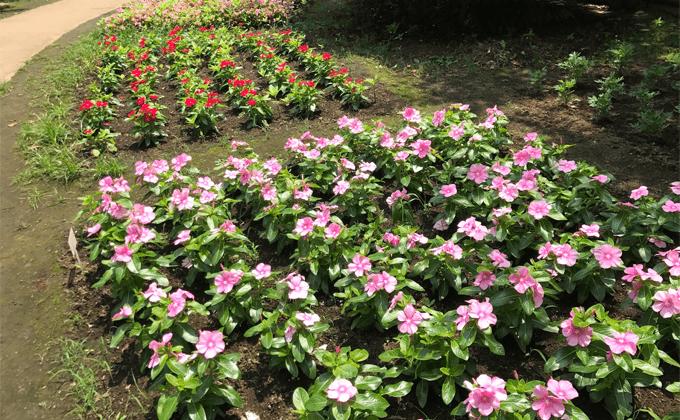 中津宮広場の花